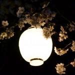 sakura-wallpaper-9